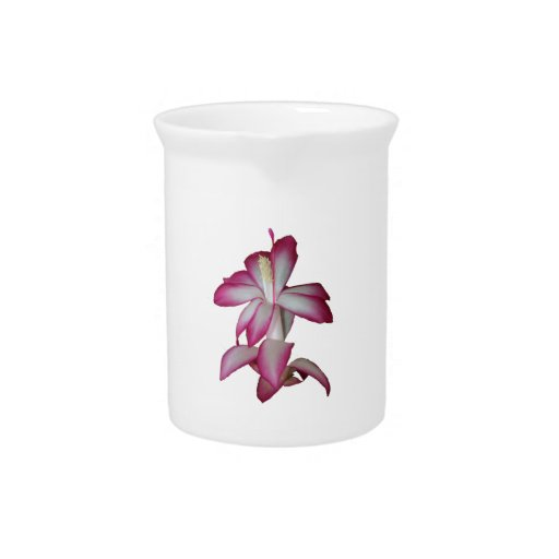 Cactus pink and white flower, succulent bloom beverage pitcher