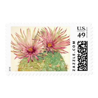 Cactus Pink Blossoms Postage