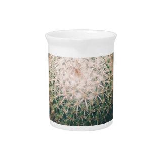 cactus pitcher