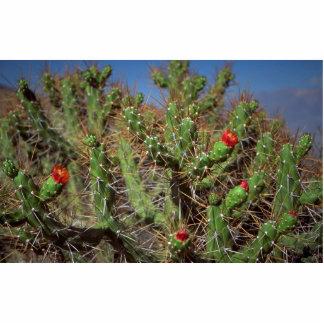 Cactus plant, Colca Canyon, Peru, South America De Statuette