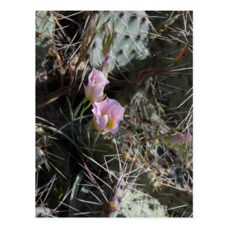 Cactus Poetry Trading Card Postcard