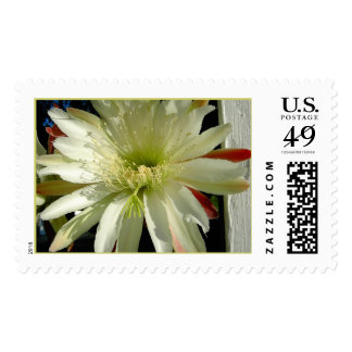 Cactus Postage