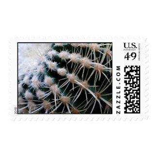 Cactus Postage Stamp