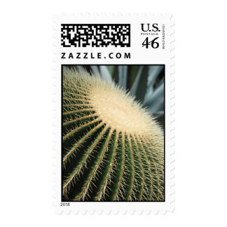 Cactus postage stamp