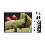 Cactus Postage Stamps