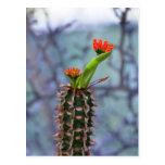 cactus postcards