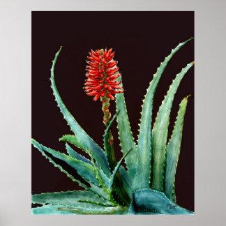 Cactus rojo del áloe póster