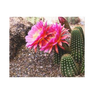Cactus rosado de Echinopsis en la floración Impresiones En Lienzo Estiradas