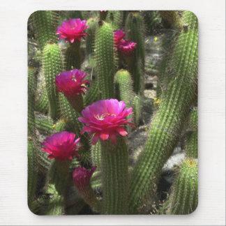 Cactus rosado de la antorcha mouse pads