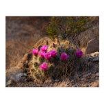 Cactus salvaje en la floración (postal)