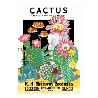 Cactus Seed Package Post Cards