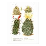 Cactus species postcards
