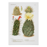 Cactus species poster