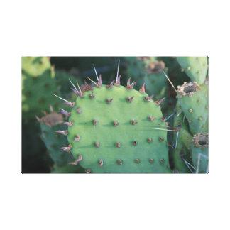 Cactus Spikes Canvas Print