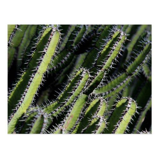 Cactus spines postcard