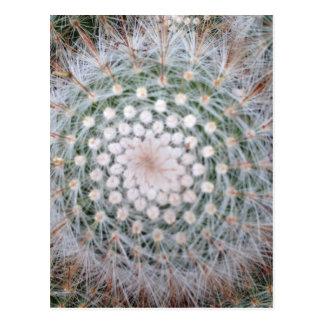 Cactus Spiral Postcard