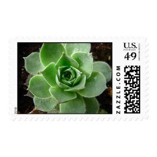 Cactus Stamp
