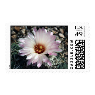 Cactus Star Postage Stamps