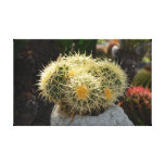Cactus Stretched Canvas Print