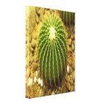 Cactus Stretched Canvas Prints