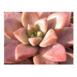 Cactus suculento tarjeta postal
