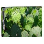 Cactus Tableros Blancos
