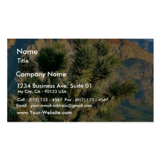 Cactus Tree Business Cards