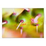 cactus. tres tarjeta
