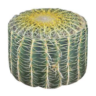 Cactus tropical incómodo divertido