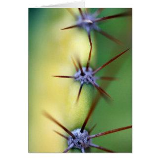 Cactus Up Close Card