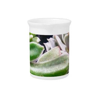 Cactus Variety Drink Pitcher