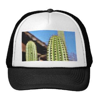Cactus verde grande gorros bordados