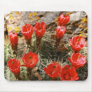 Cactus with Beautiful Red Blooms Mouse Pad