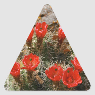 Cactus with Beautiful Red Blooms Triangle Sticker