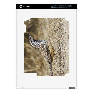 Cactus wren adult foraging decals for iPad 3