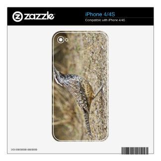 Cactus wren adult foraging iPhone 4S skins