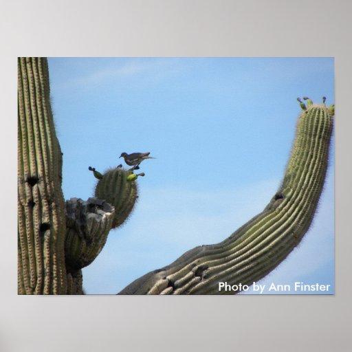 Cactus Wren atop a Saguaro Cactus Poster