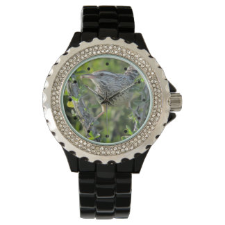 Cactus Wren on Ocotillo Watches
