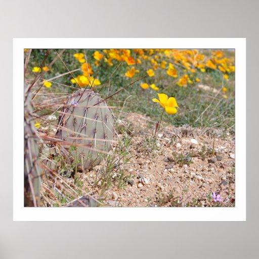 Cactus y amapola de la pera de Prickley Posters