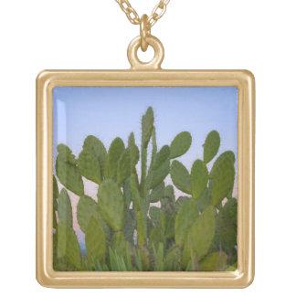 Cactus y sisal en bosque seco colgante cuadrado