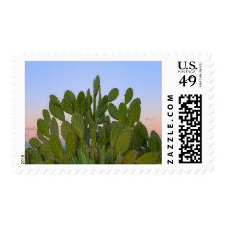 Cactus y sisal en bosque seco sellos postales