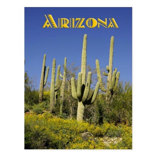 Cactus y wildflowers amarillos, Arizona del Postales
