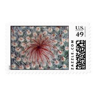 Cactus's spiky center postage