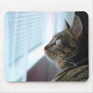 Cada el gatito comtempla afuera tapetes de ratón