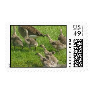 Cada uno hacia fuera timbres postales