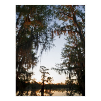 Caddo Lake at sunrise Postcard