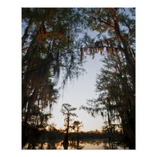 Caddo Lake at sunrise Poster