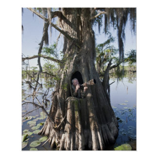 Caddo Lake, hunting blind Posters