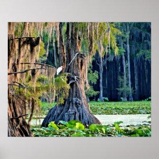 Caddo Lake Poster Cypress Bird 001