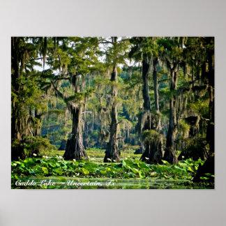 Caddo Lake - Poster Print - Cypress 001